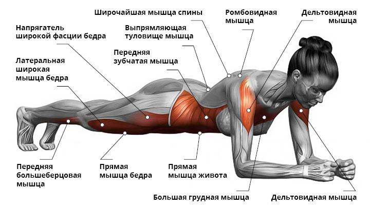 Работающие мышцы при выполнении планки