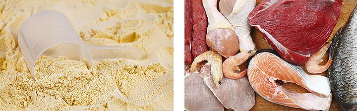 Протеин или белковая пища