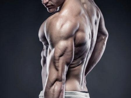 Трёхглавая мышца плеча