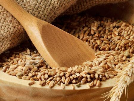 пшеница как источник белка